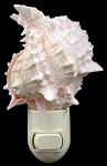 Pink Murex Seashell Nightlight