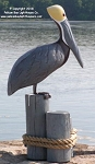 3750111 Brown Pelican on Pilings, Carved Wood, 35